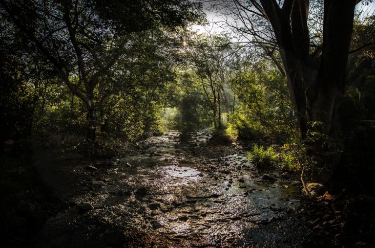 Paisaje en lo alto de la Sierra Madre de Guerrero.