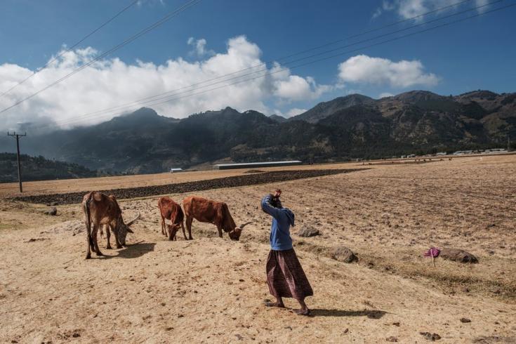 Un joven pastor se encuentra junto al ganado en la ciudad de Korem, al norte de Alamata, en Etiopía, el 8 de diciembre de 2020.