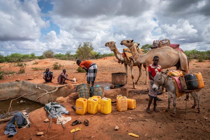 Los camellos se usan para transportar el agua potable para el consumo familiar en un 'berkit' completo (estanque de arcilla para recolectar agua de lluvia). Región somalí.