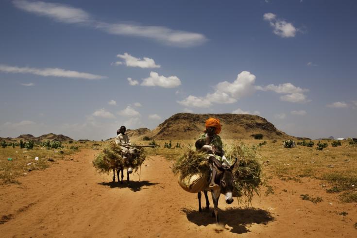 Los burros llevan personas y paja a través de la ciudad de Tawila, en el estado de Darfur del Norte, en el oeste de Sudán.