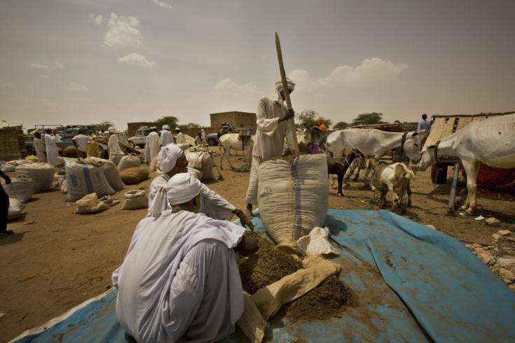 Grandes sacos de tombac siendo preparado en el mercado. Es un tabaco de mascar local producido en Tawila, estado de Darfur del Norte, Sudán occidental.