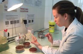 App para identificar la resistencia a los antibióticos