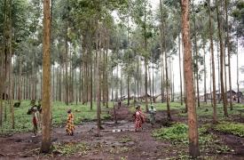 República Democrática del Congo: una compañera secuestrada consiguió escapar, Médicos Sin Fronteras (MSF) pide ayuda para encontrar a los otros tres trabajadores aún retenidos